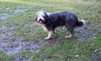Goodbye dog: a fond farewell